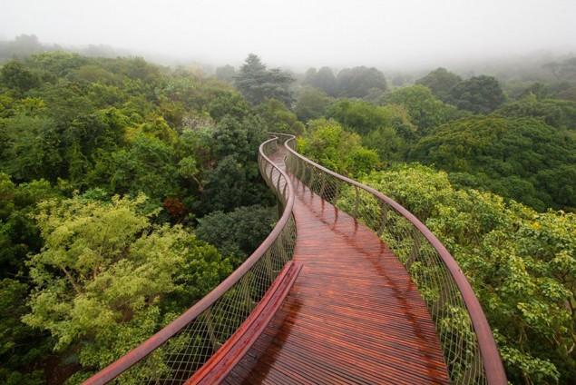 A ponte que te permite andar por cima das árvores de um jardim, na África do Sul - image 2