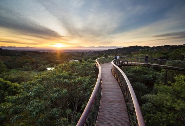 A ponte que te permite andar por cima das árvores de um jardim, na África do Sul - image 4