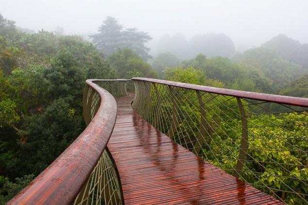 A ponte que te permite andar por cima das árvores de um jardim, na África do Sul - image 5