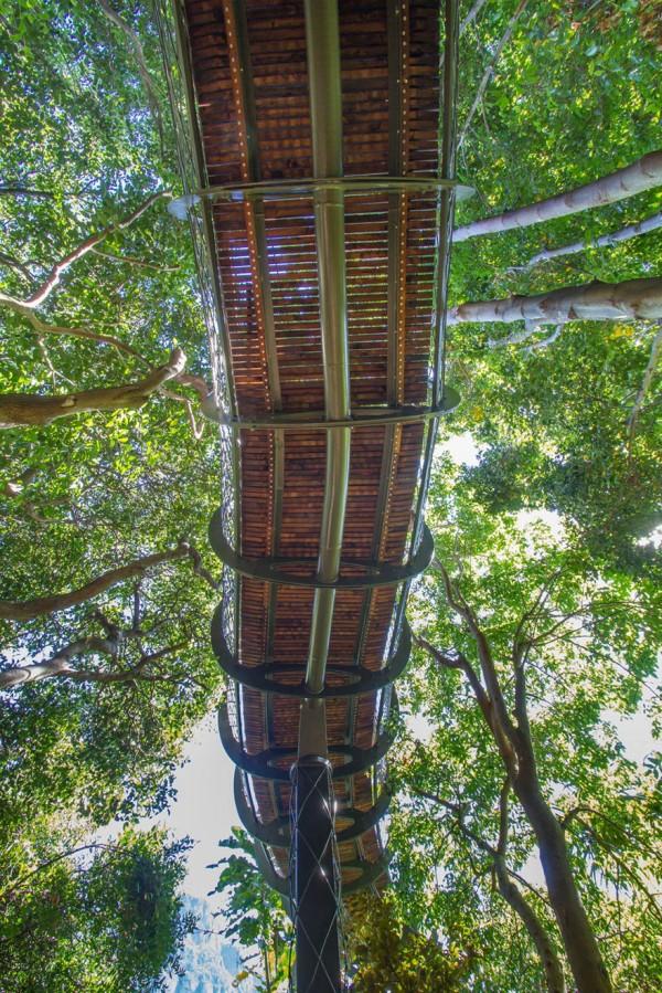 A ponte que te permite andar por cima das árvores de um jardim, na África do Sul - image 6