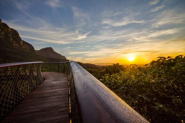 A ponte que te permite andar por cima das árvores de um jardim, na África do Sul - image 7