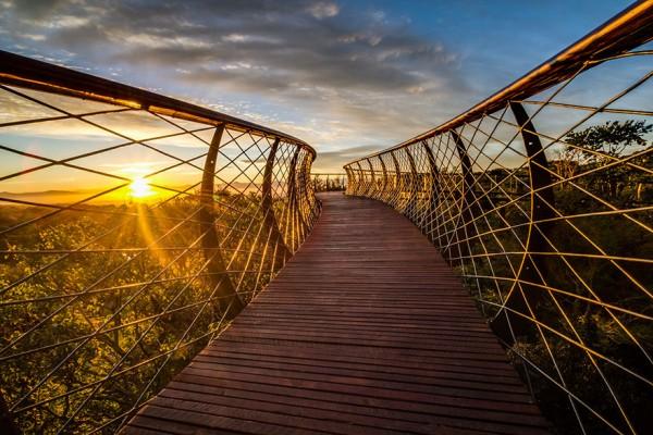A ponte que te permite andar por cima das árvores de um jardim, na África do Sul - image 8