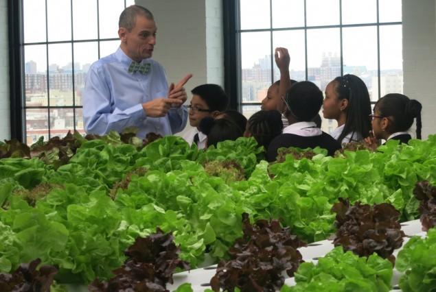 Professor leva horta para dentro da sala de aula para intensificar aprendizado e cativar alunos - image 3