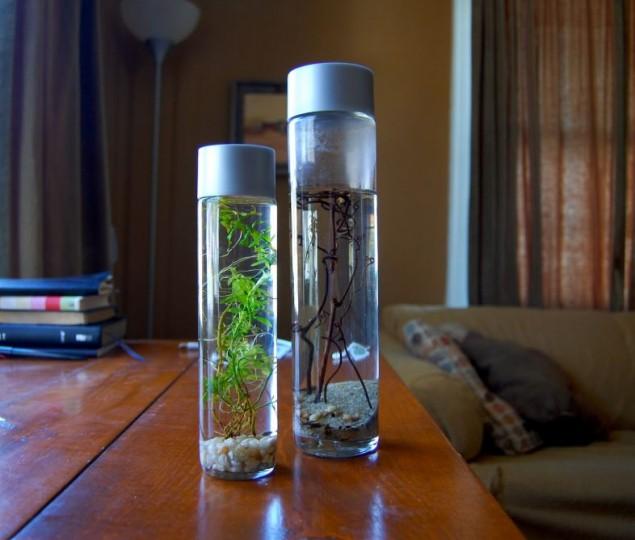 8 ideias para reutilizares garrafas de vidro na decoração - image 4