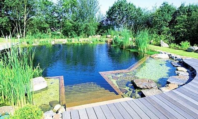 Inovadoras e sustentáveis piscinas biológicas que trocam o cloro por plantas - image 3