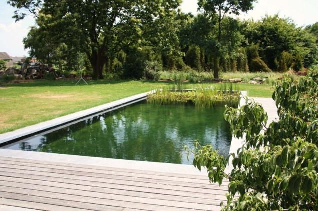 Inovadoras e sustentáveis piscinas biológicas que trocam o cloro por plantas - image 5