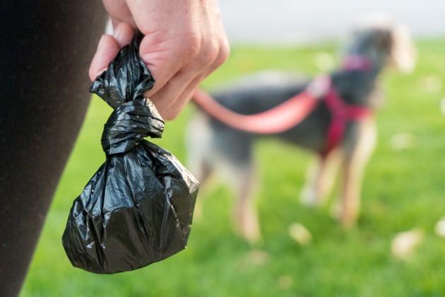 Oito ideias para reutilizares sacos de plástico! - image 5