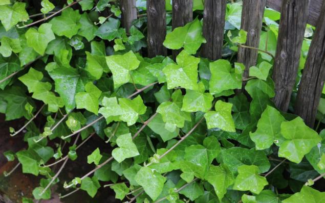 Plantas que podem diminuir a humidade em casa - image 4