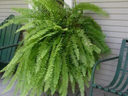 Plantas que podem diminuir a humidade em casa