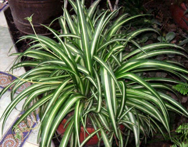 Plantas que podem diminuir a humidade em casa - image 2
