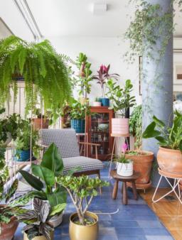 10 razões fantásticas para teres plantas em casa